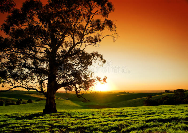 Download Rural Sunset stock image. Image of nature, lonely, meadow - 19370647