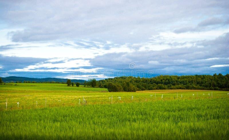 Download Rural sweden stock image. Image of rural, landscape, vibrant - 10543307