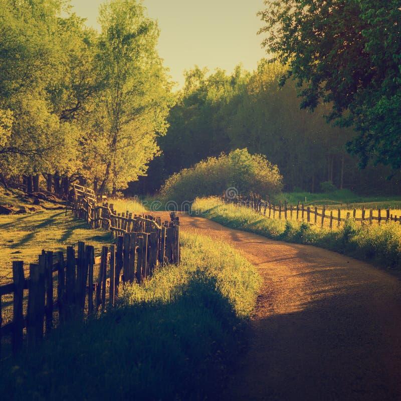 Download Rural Sweden landscape stock image. Image of route, curve - 83716755