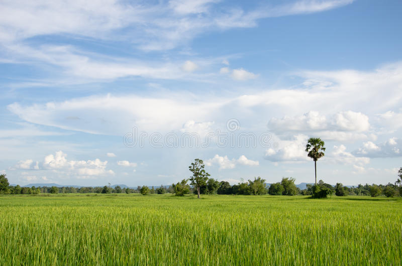 Download Rural of thailand stock image. Image of asia, field, landscape - 26613365