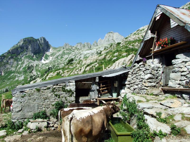 Rural traditional architecture and livestock farms on the slopes of Alpstein mountain range and in the river Thur valley. Canton of St. Gallen, Switzerland royalty free stock photo