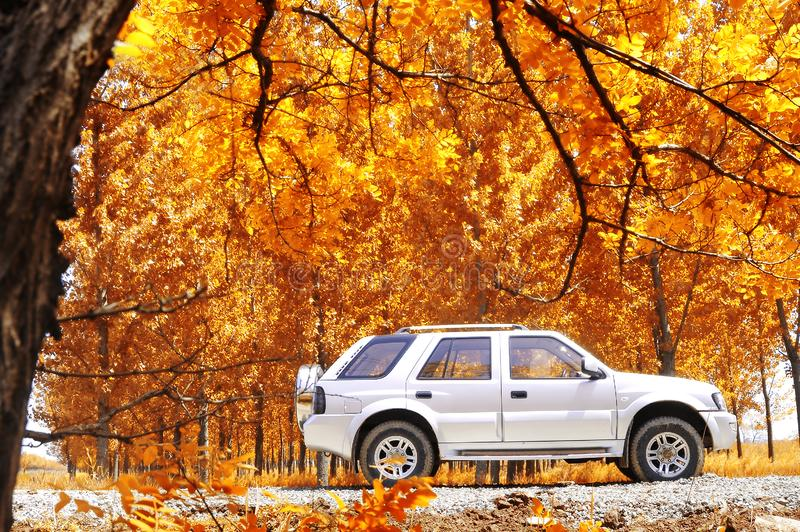 Rural travel in autumn stock image