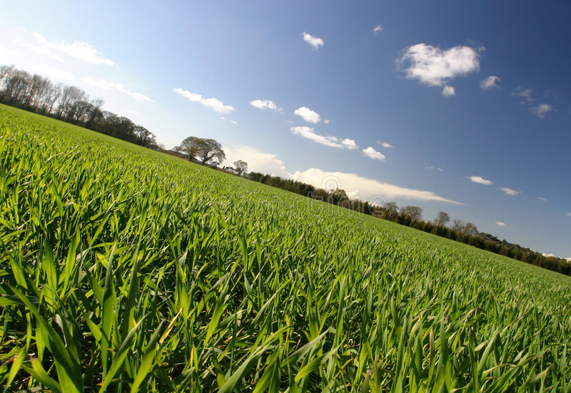 Download Rural View stock image. Image of growing, sunny, field - 107939