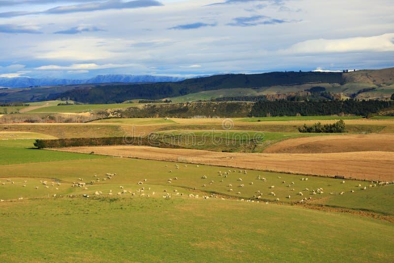 Rural View of Ashburton Taupo New Zealand Grazing Pasture stock photography