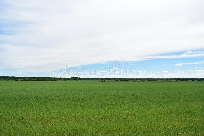 Rural village field of cereal crops sky clouds royalty free stock photography