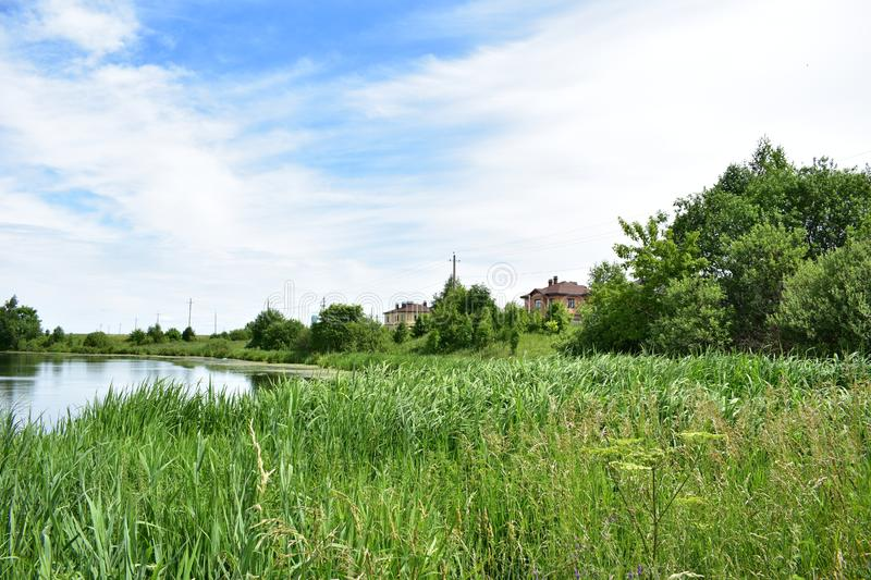 Rural village pond high grass clouds in the sky. Hot summer day by the water stock images