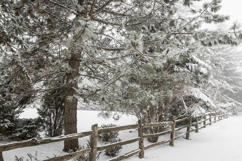 Rural winter scene with fence royalty free stock photography