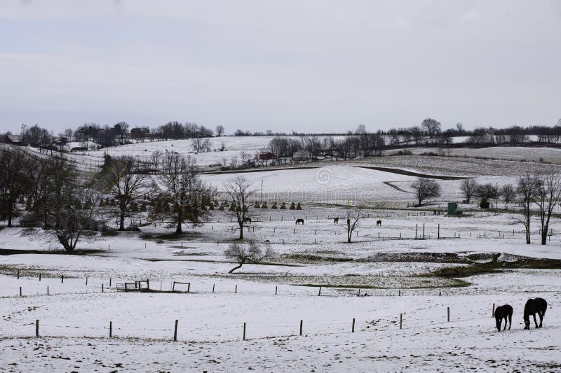 Rural winter scene royalty free stock photos