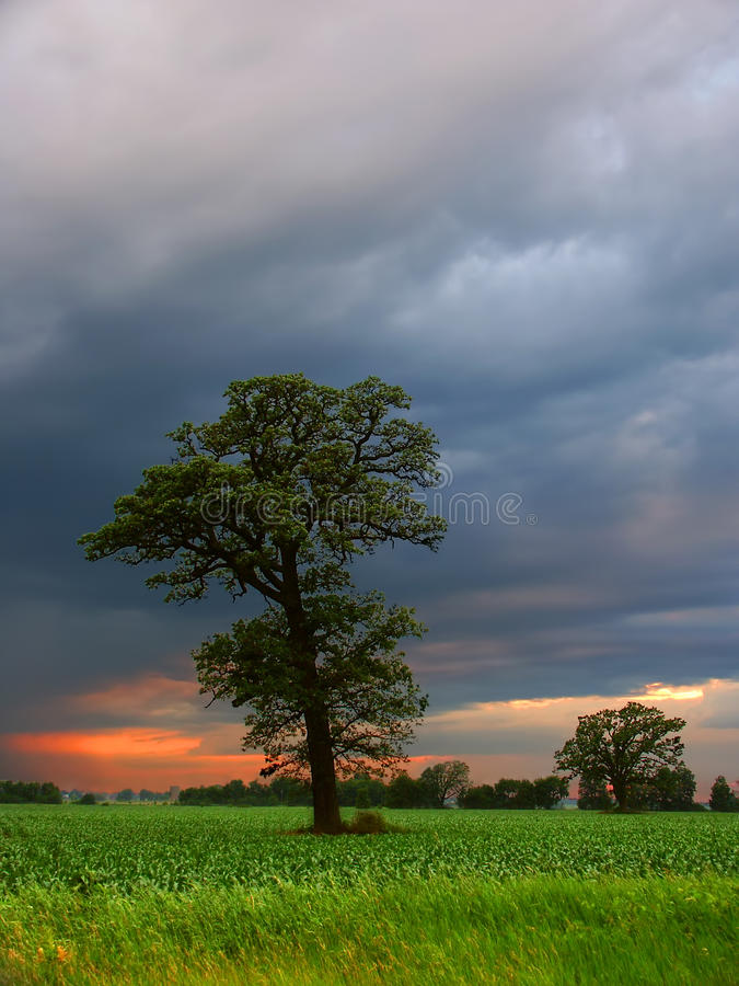 Rural Wisconsin Agriculture royalty free stock photos