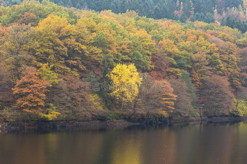Rursee during fall in National Park Eifel, Germany. Beautiful autumn colors in National Park Eifel, Germany royalty free stock images
