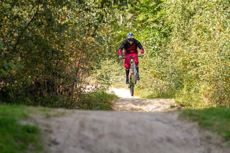 Rusa för bergcyklist som är sluttande på ett mountainbikespår i träna royaltyfria foton