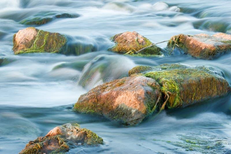 rusa för flod royaltyfri foto