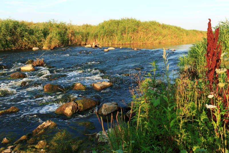rusa för flod royaltyfri bild
