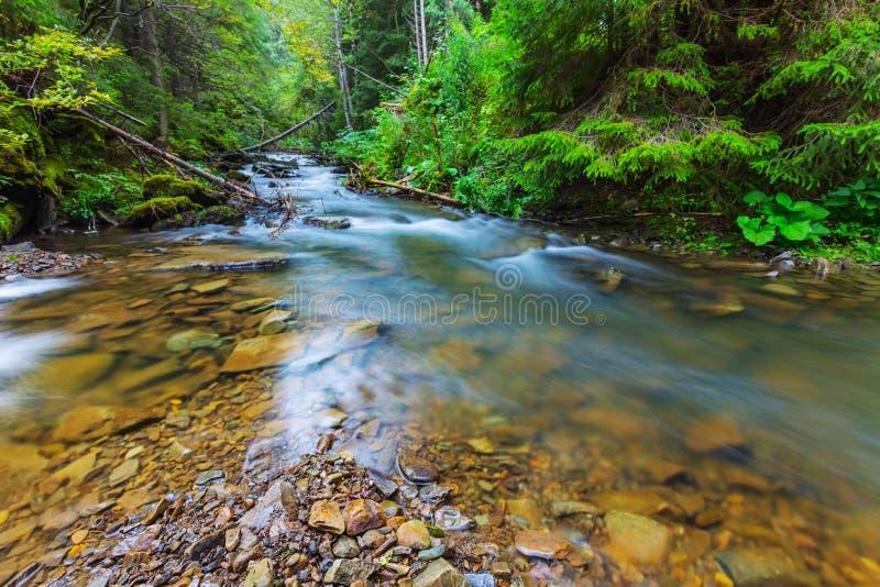 Rusa floden i en grön skog royaltyfria foton