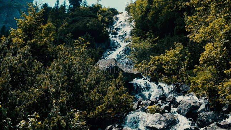 Rusa skummande vatten av den steniga vattenfallet i skogen royaltyfri foto