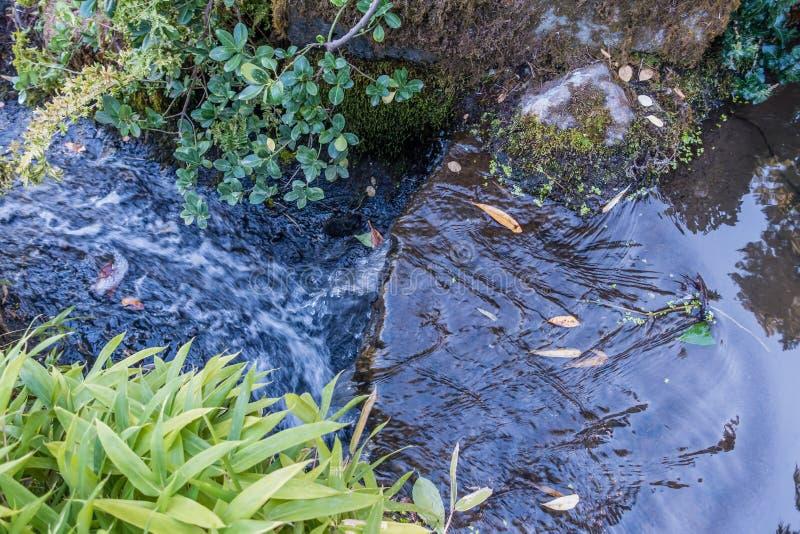 Rusa vattencloseupen royaltyfria bilder