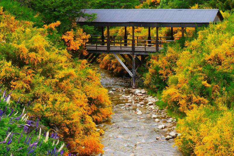 Ruscello con le scope in fiore durante la molla in angostura della La della villa, Meliquina, Patagonia Argentina fotografie stock libere da diritti