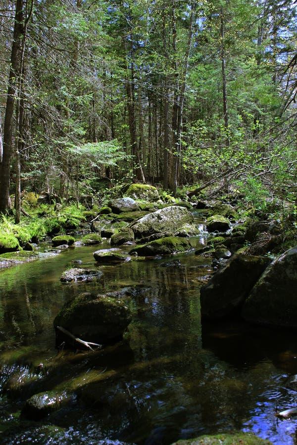 Ruscello della foresta immagini stock