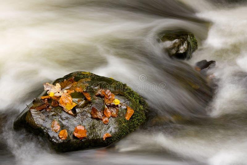 Ruscello nascosto in autunno fotografie stock libere da diritti