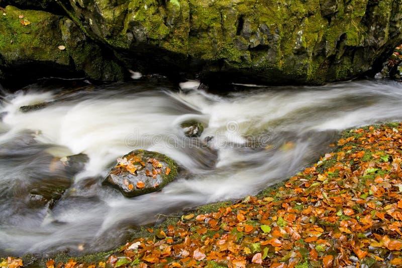 Ruscello nascosto in autunno fotografia stock