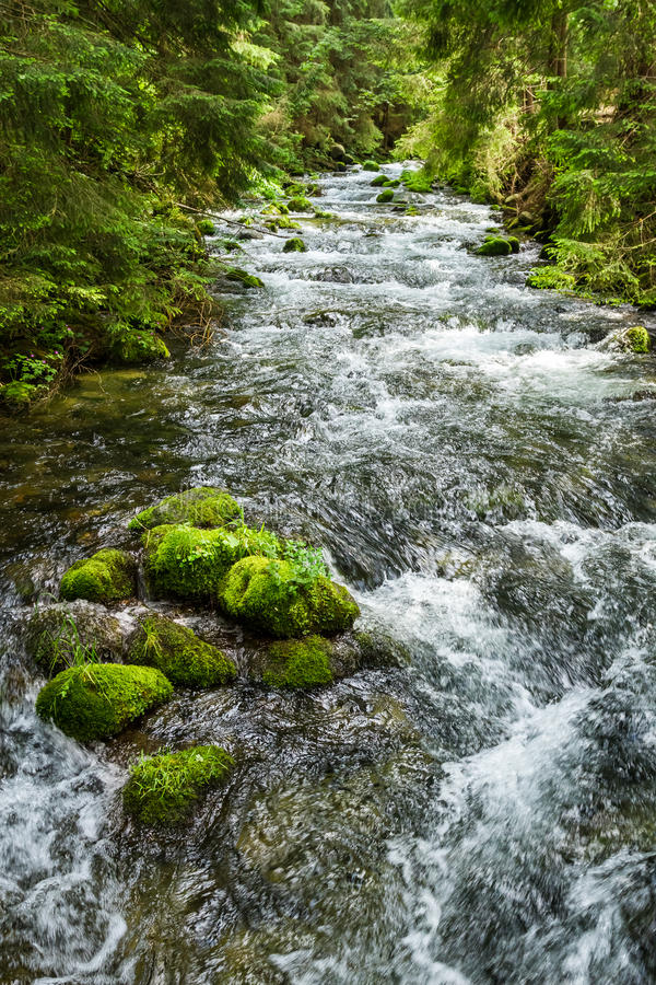 Rushing mountain stream in the forest royalty free stock photos