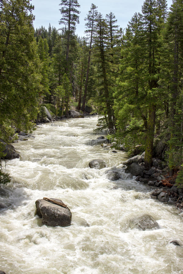 Rushing River. In the forest stock photo