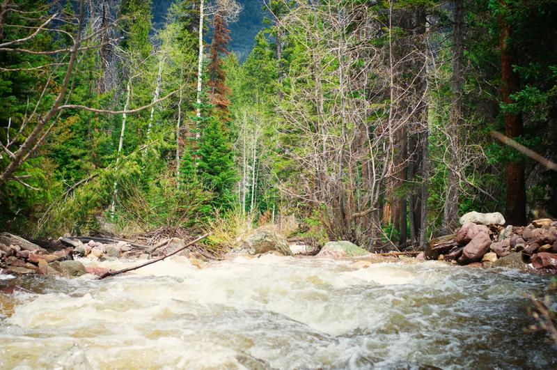Rushing river water surrounded by trees royalty free stock photography