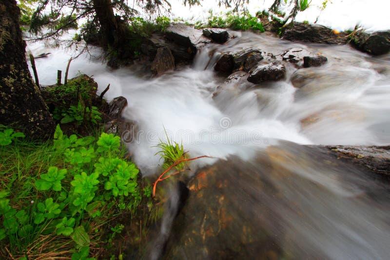 Rushing rocky stream stock images