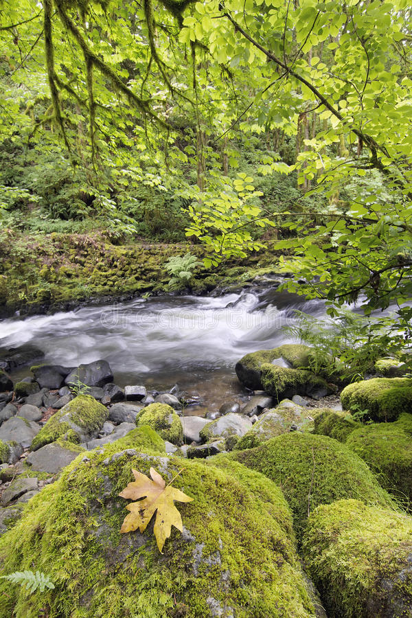 Free Rushing Water With Rocks At Cedar Creek Washington State Royalty Free Stock Image - 32257916