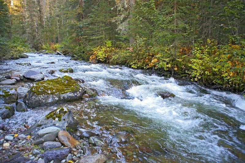 Rushing waters of unspoiled Wilderness Creek royalty free stock photo