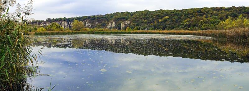 rushy καλοκαίρι λιμνών στοκ φωτογραφίες με δικαίωμα ελεύθερης χρήσης