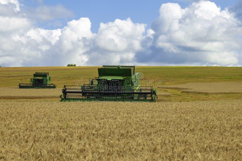 Rusia , Dmitrov - 2 de agosto de 2019 : Combinar la cosecha de trigo en el verano soleado fotografía de archivo libre de regalías