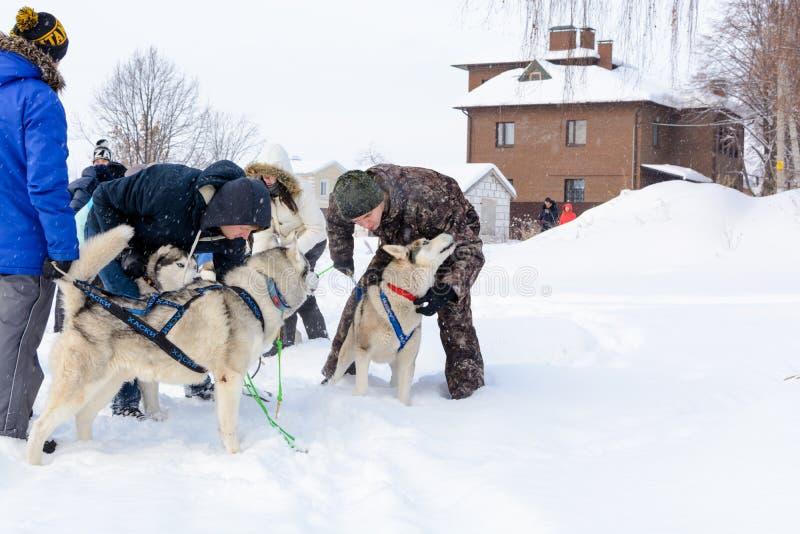 Rusia kazan 14 de febrero Equipo del trineo del perro de huskyes siberianos hacia fuera mushing en la nieve que tira de un trineo imagen de archivo libre de regalías