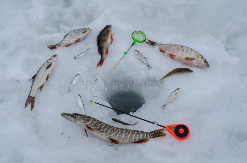 Rusia, pesca del invierno, competencias de la pesca del hielo, bajo, zona acotada de pesca, trastos, hielo, invierno, río, paisaj imágenes de archivo libres de regalías