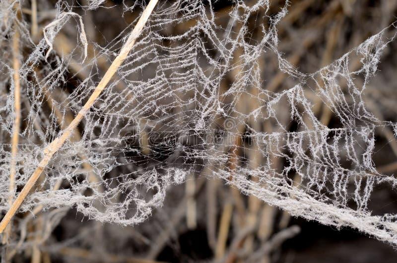 Ruskig spindelrengöringsduk i ladugården royaltyfria foton