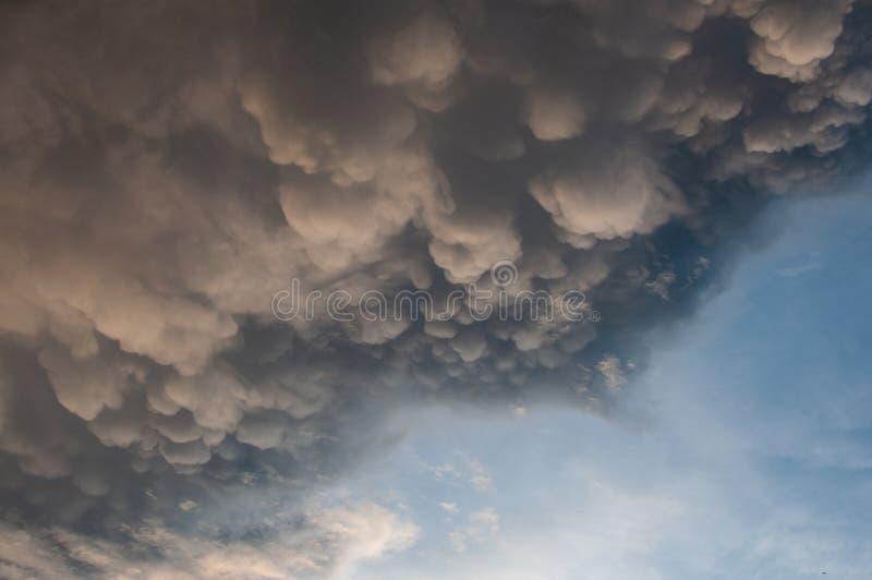Ruskigt däggdjurmoln i den blåa himlen fotografering för bildbyråer