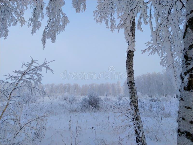 Rusland, ijzige ochtend in een berksteeg stock fotografie