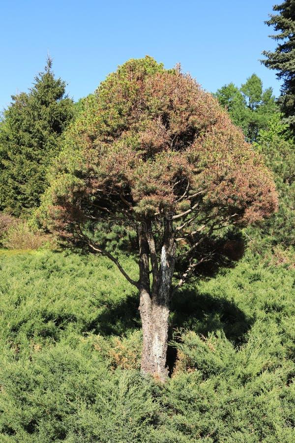 Rusland, Moskou, park, de zomerfoto van een boom stock foto's