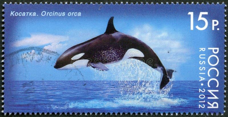 RUSLAND - 2012: toont Orka, reeks Fauna van Rusland. Walvissen vector illustratie