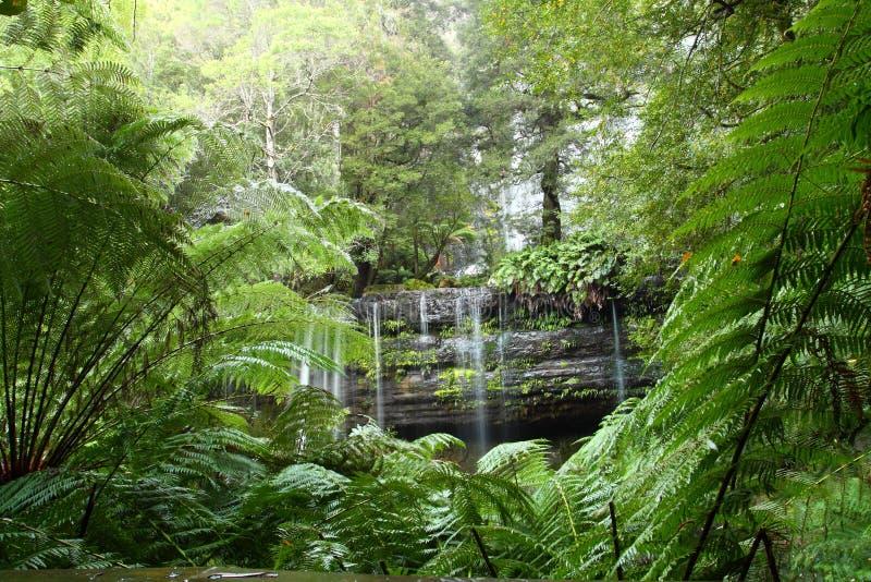 Russel fällt Mt-Feld-Nationalpark, Tasmanien, Aus lizenzfreie stockbilder