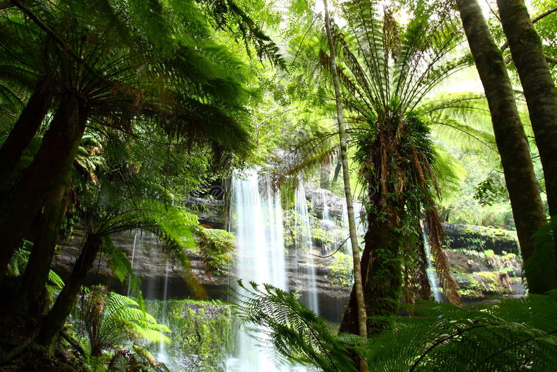Download Russel Falls Mt Field National Park, Tasmania, Aus Stock Image - Image: 19521757