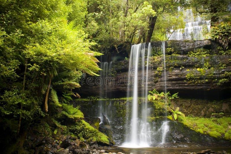 Russel Falls, Tasmania. Russel Falls waterfall in the Mt Field National Park, Tasmania, Australia stock photography