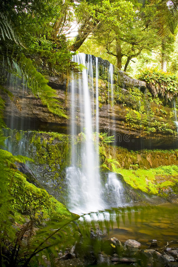 Russel Falls, Tasmania stock photography