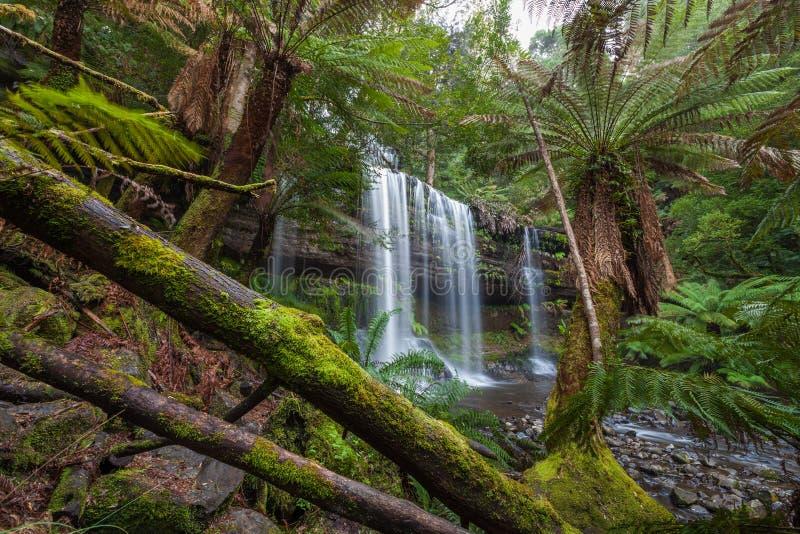 Russel Falls in weelderig regenwoud zet Gebieds Nationaal Park, Tasm op royalty-vrije stock foto's
