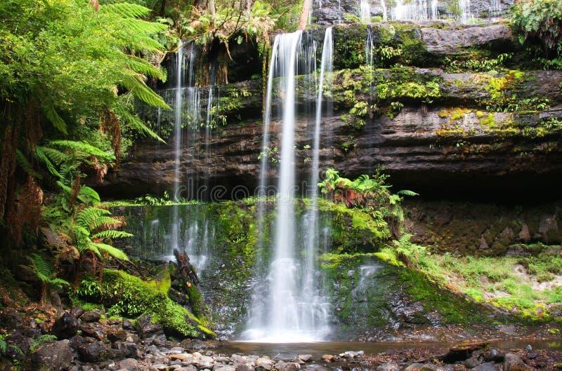 Russell cade in Tasmania immagine stock libera da diritti