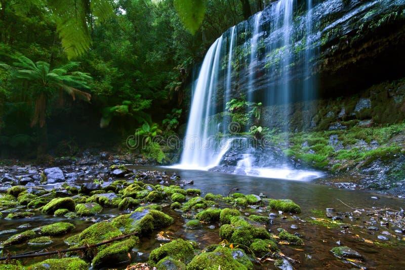 Download Russell falls stock photo. Image of fall, fresh, beautiful - 24034482