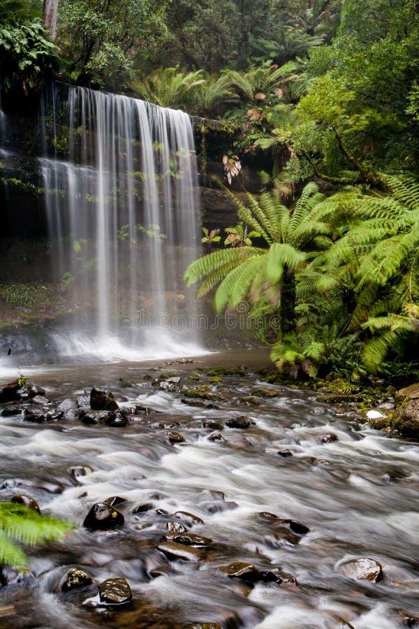 Russell Falls arkivbilder