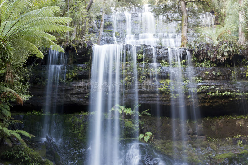 Russell Falls royalty free stock photography