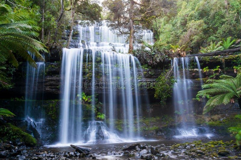 Russell Falls i monteringsfältnationalparken, Tasmanien royaltyfri fotografi