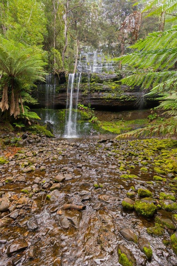 Russell Falls tiered—kaskadvattenfall med stenen täckte intelligens royaltyfri bild